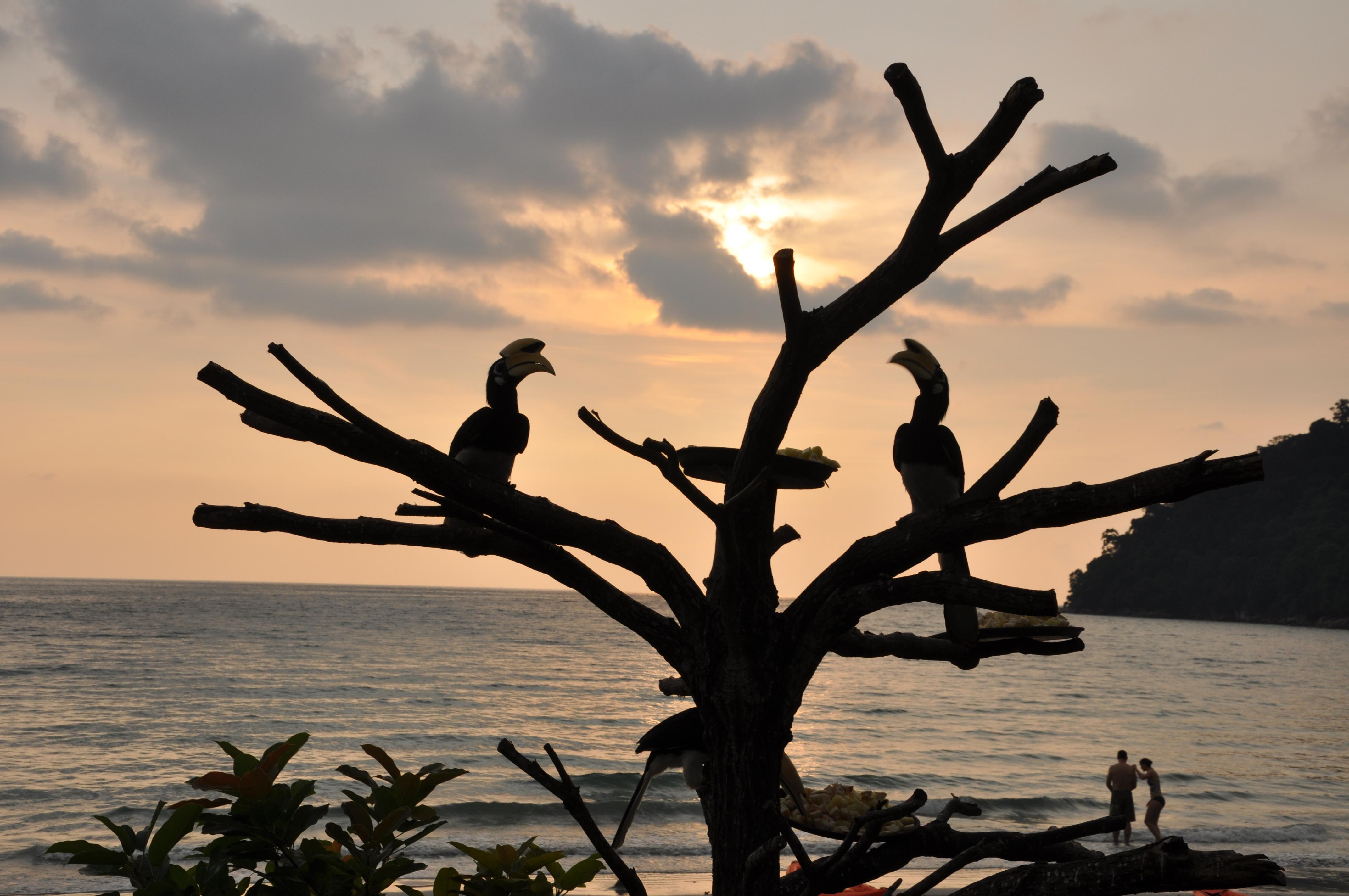 neushoornvogel bij het strand